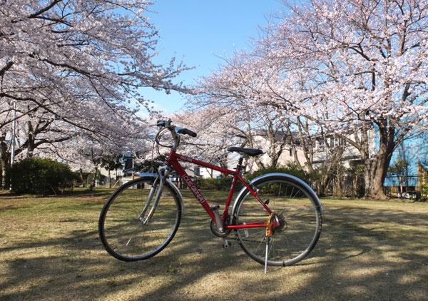 13.3.26_桜1