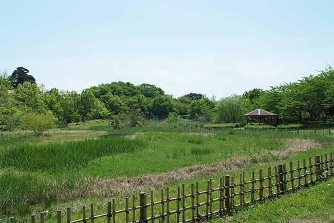14.5.4_実籾本郷公園1