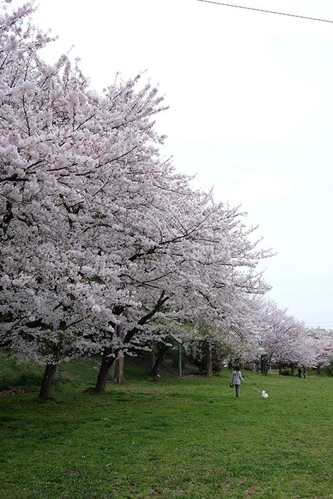 15.4.4_実籾本郷公園1