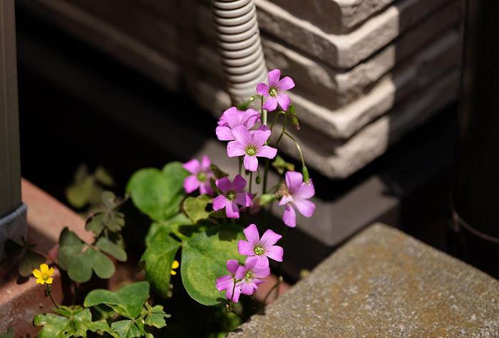 15.5.17_Home Garden_5
