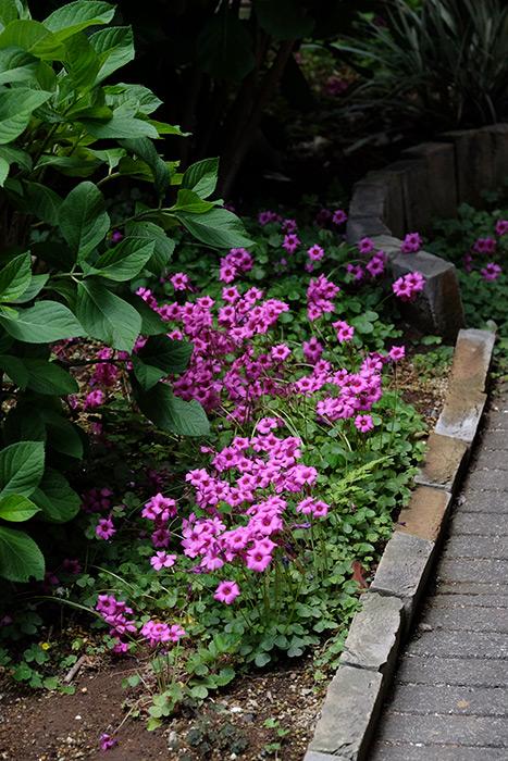 15.5.17_Home Garden_6