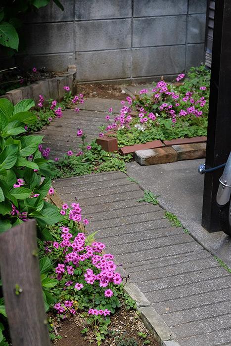 15.5.17_Home Garden_7