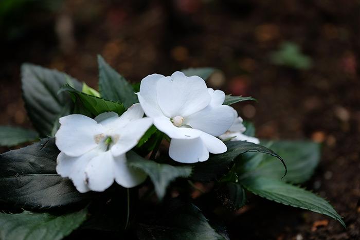 15.5.17_Home Garden_8