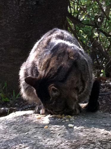 桜の公園の猫