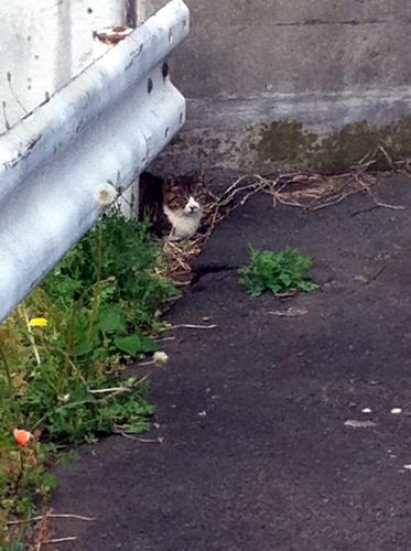 こっち見てる猫