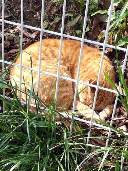 茶色猫変な寝方