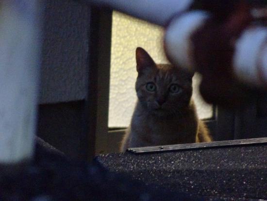 扉の前で誰かを待つ猫