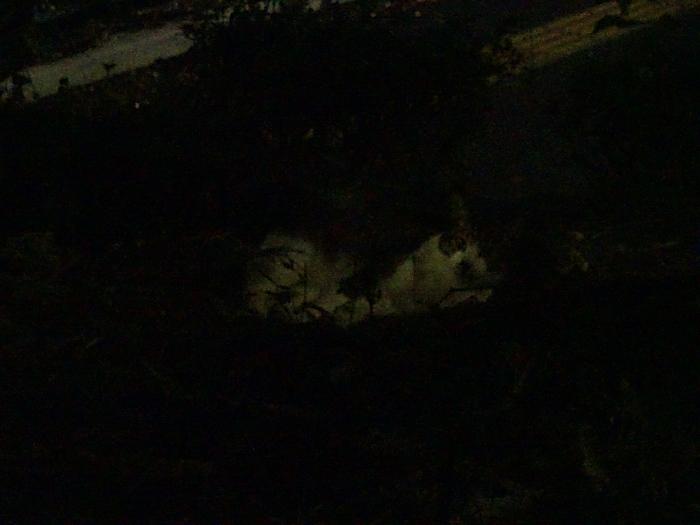 夜猫横座り