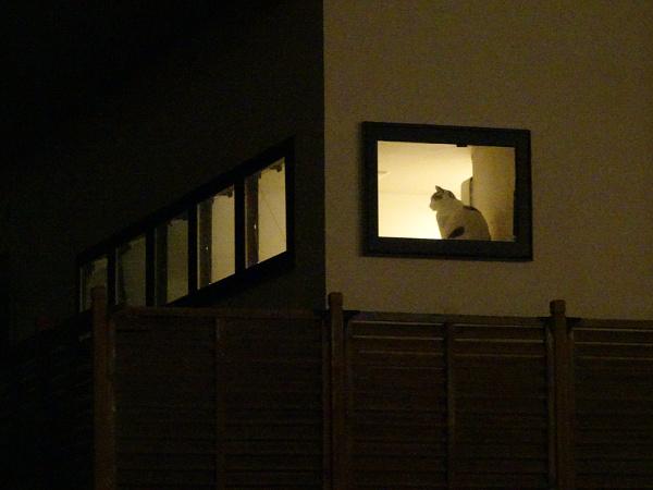 夜窓猫 其の二