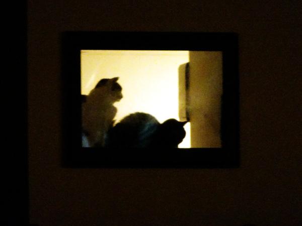 窓際の猫二匹 アップ