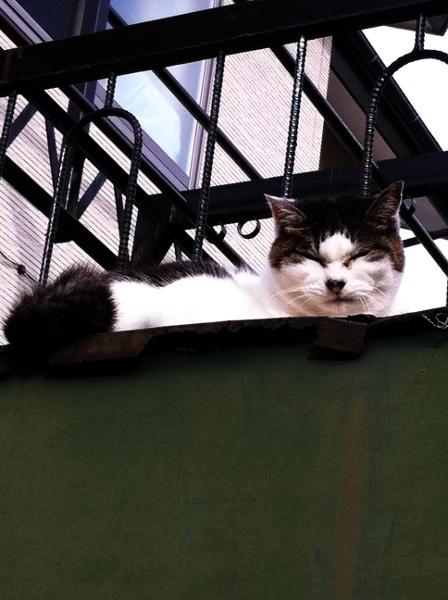 顔がむくむくの猫