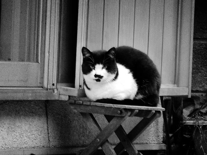 黒白変な模様の猫