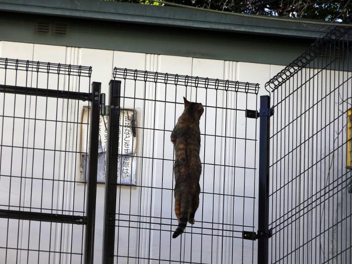 金網を登る猫
