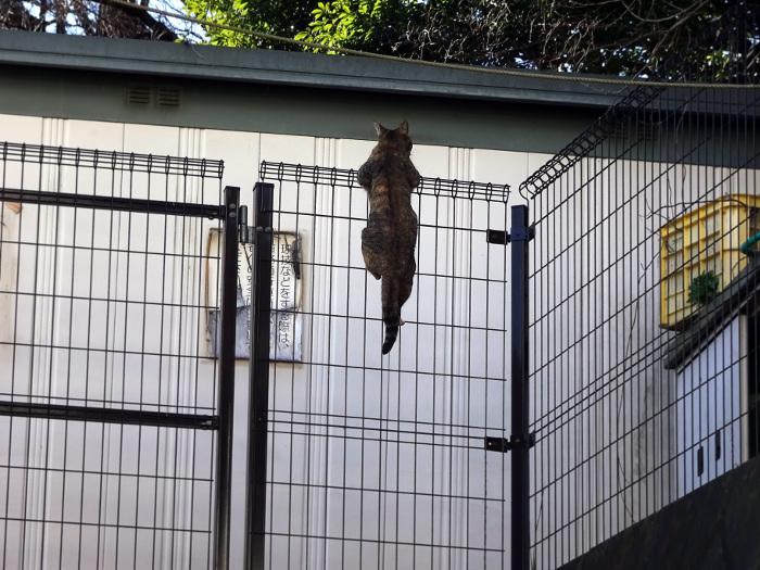 金網に摑まる猫