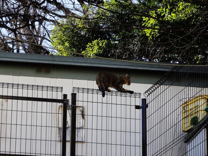 金網の上の猫