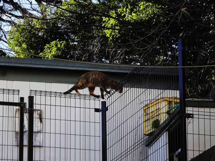 金網の上を歩く猫