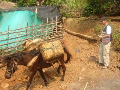パーデンルアン村の馬