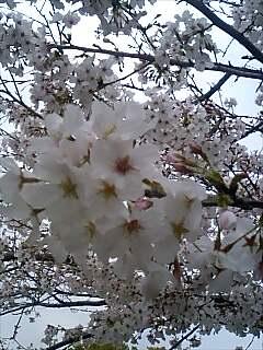 桜080402