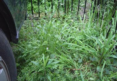 庭草摘-1