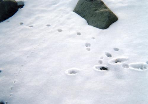 雪上の足跡〜尻屋崎91年冬