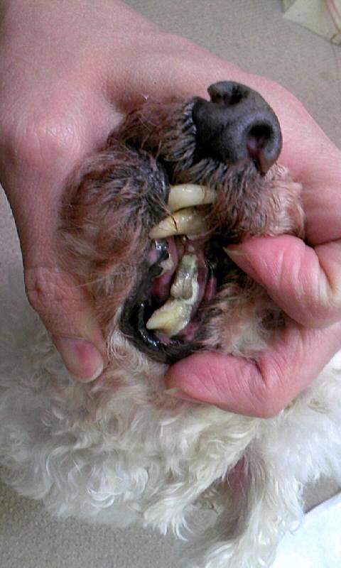 歯石取り、マウスクリーナーの効果