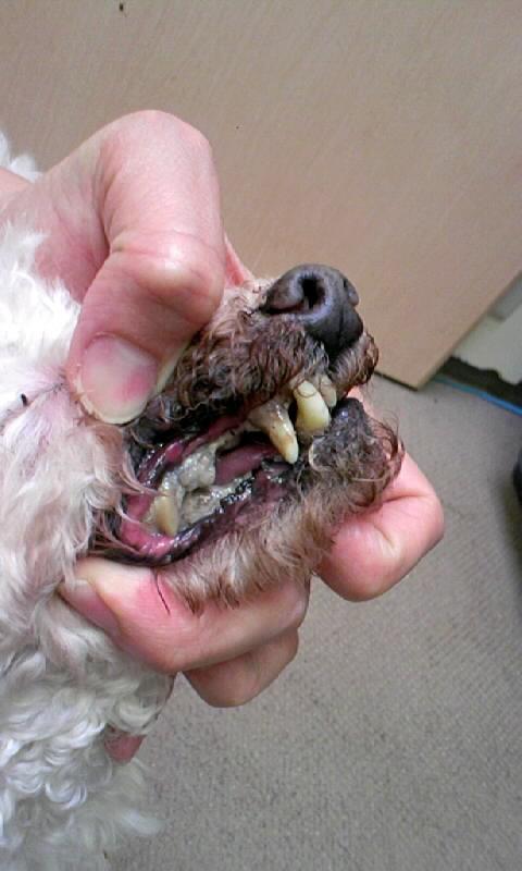 犬の歯石 マウスクリーナー