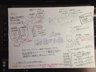 ドッグフードと酵素の関係