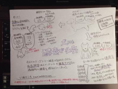 犬の酵素とドッグフード