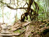 アートな木が結構あって面白かったです何でもこの林は最終形態だそうだ