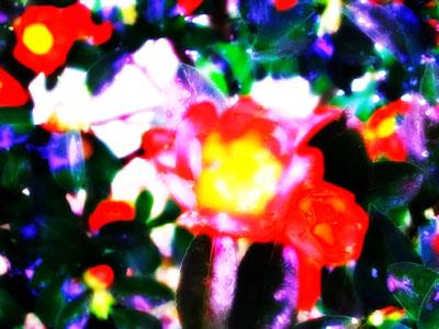 椿ハードライト×5