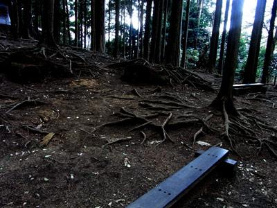 鞍馬山の木って根っこが怖いよな
