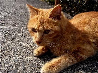 寂光院に到る道にて。観光地の猫は人に慣れてて癒されます