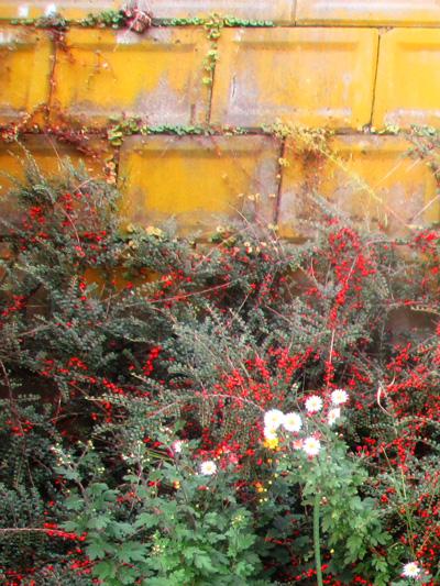 花の多い町です。仏様のためなんだとか