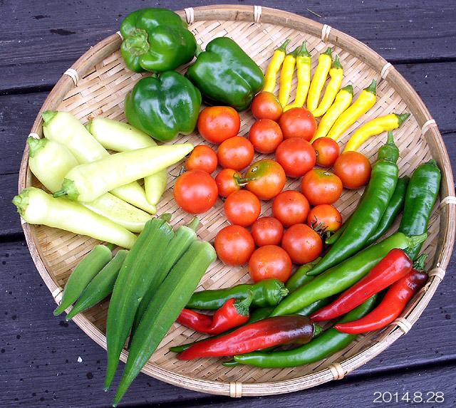 収穫 ピーマン オクラ 黄とうがらし 万願寺とうがらし フルティカ バナピー