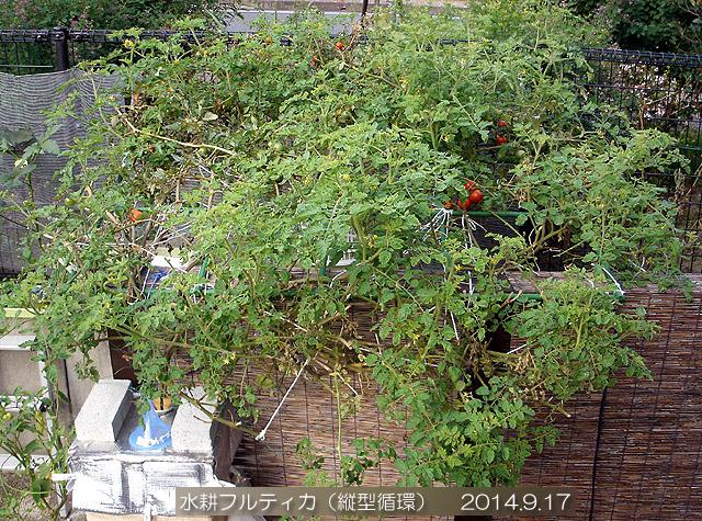 フルティカ トマト 水耕栽培 トマト棚