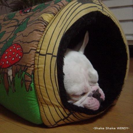 frenchbulldog casper