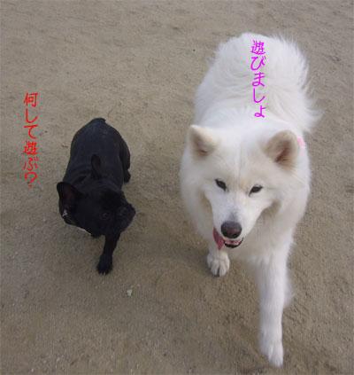 遊ぼう〜♪