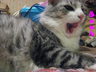 あくびでるにゃん!
