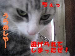 うらめしや〜