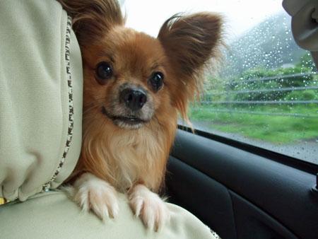 愛犬連れて旅行