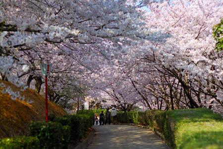 お花見@朝日山森林公園