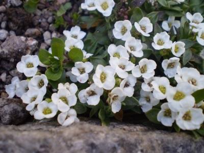 片隅の花1