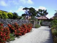 真っ赤なブーゲンビリアの生垣がきれい。 石垣は石ではなく、実はサンゴ。道路の白砂も、粉々になったサンゴです。