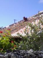 赤煉瓦の屋根。この島の古くからの民家は、どれもこんな感じです