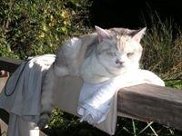池の手すりで寝るネコ。なんか敷いてあるけど飼い猫じゃあ・・・ないよねえ、まさか