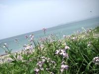 お花も海もキレイ