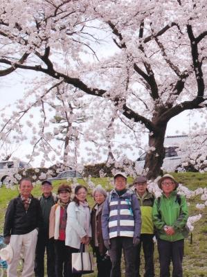 5_鴨川の桜.jpg