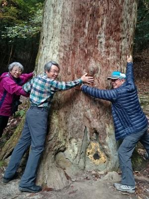 7_杉の巨木.JPG