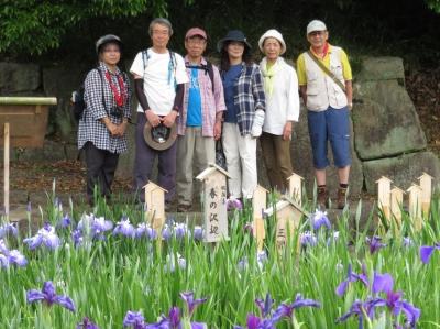 7花菖蒲園.JPG