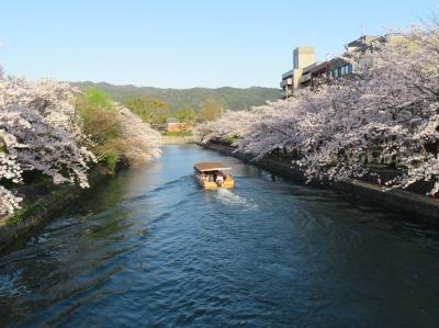 12:岡崎疎水の桜並木.JPG